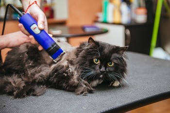 Стрижка кота